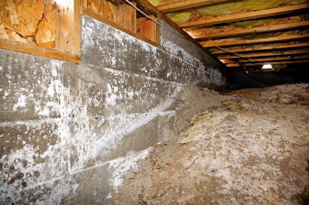 Locate Mold in Your Living Space & Call For Dehumidifier Installation